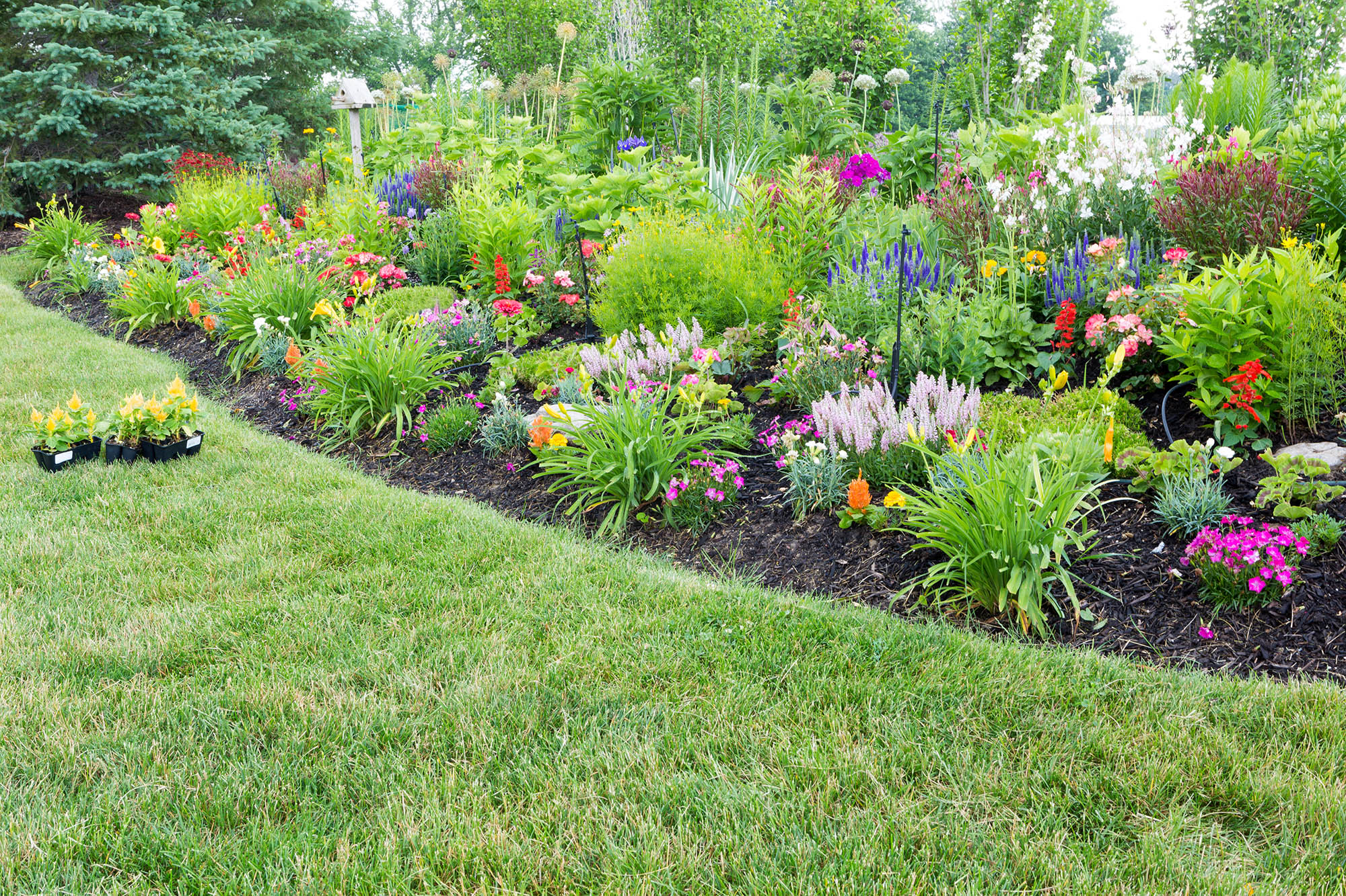 Spring Garden Planning: Expressing Your Personality and